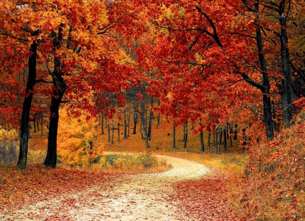 path through vibrant red and orange autumn forest